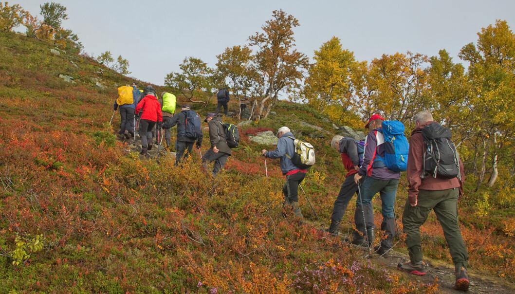 Gikk etter turistlina til Jøldalen på første del av turen. Tørr og god sti oppover bjørkelia