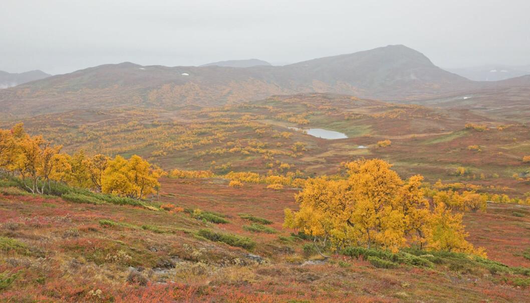 Kom litt yr på slutten av turen. Gjorde ingenting. Utrolig flotte høstfarger!