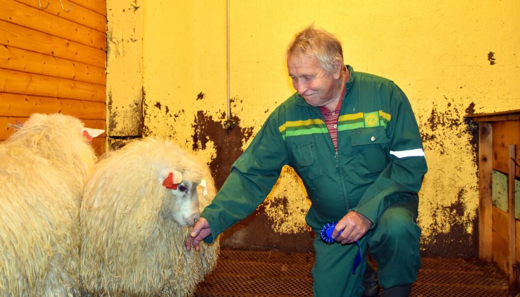 Full pott for lammene til Magne Heggset