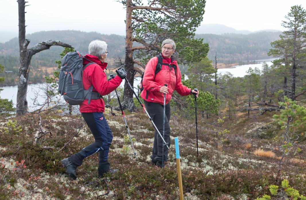 Fra Seterdalen fulgte vi en nymerka tursti til Litlraudfjellet.