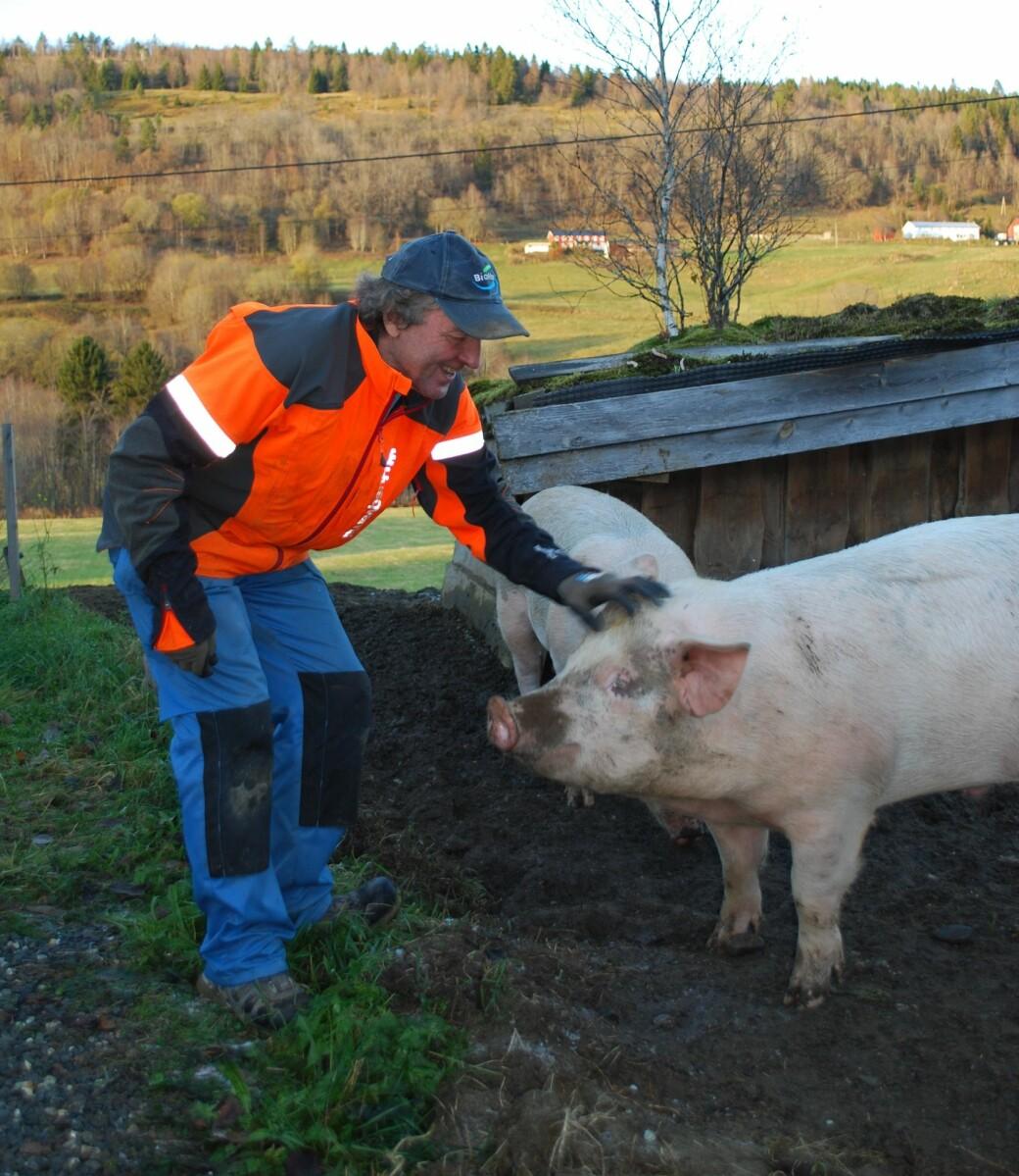 Edvin tek avskjed med grisane sine. Han har mata, stella og kosa med grisane sidan i vår. Det er mykje arbeid med grisane, dei får mykje mat frå butikkane, men sidan maten er rå må han kokas før grisane kan ete det.