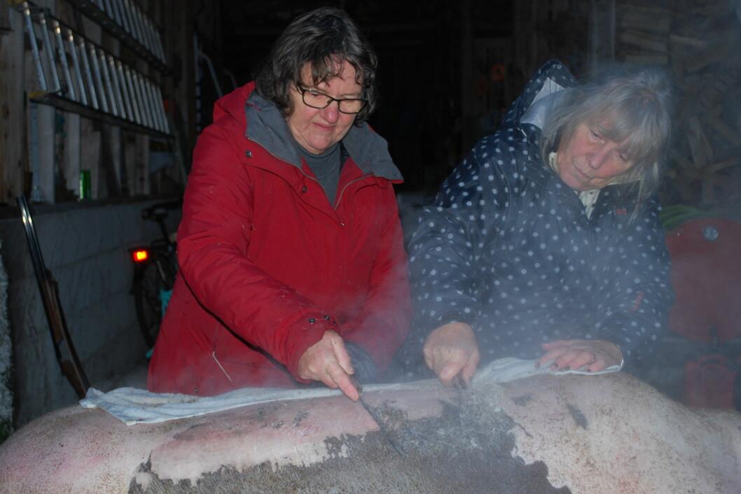 Gøril Bakken og Laila Børset fjernar restar av busta med kniv og kokande vatn.