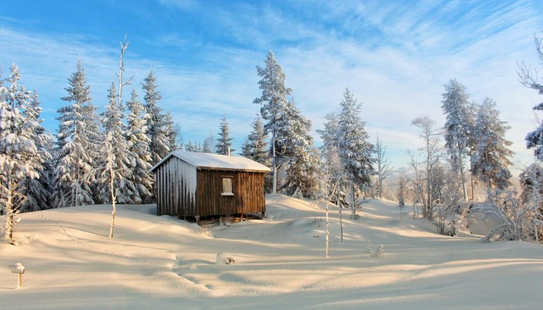 Bilde av Haraldhøtta på Tiursåsen i Åsan, blir motiv på årets Fjelltrimmenkrus.