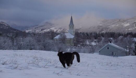 Både dyr og folk trives bedre i snøen enn på hålka. Katten Luna var med på hele runden om Rindal Kirke og Rindalsholt.