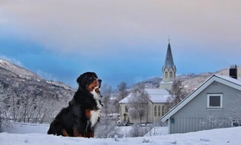 På Holtgjerin var også hunden Mira fra Øvre ute og koste seg.