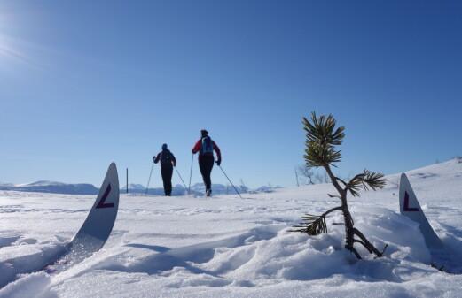 Månedens tur i februar går til Finnråa i Tørsetmarka.