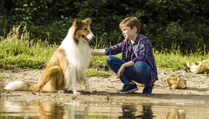 """Foto frå """"Lassie kommer hjem"""""""