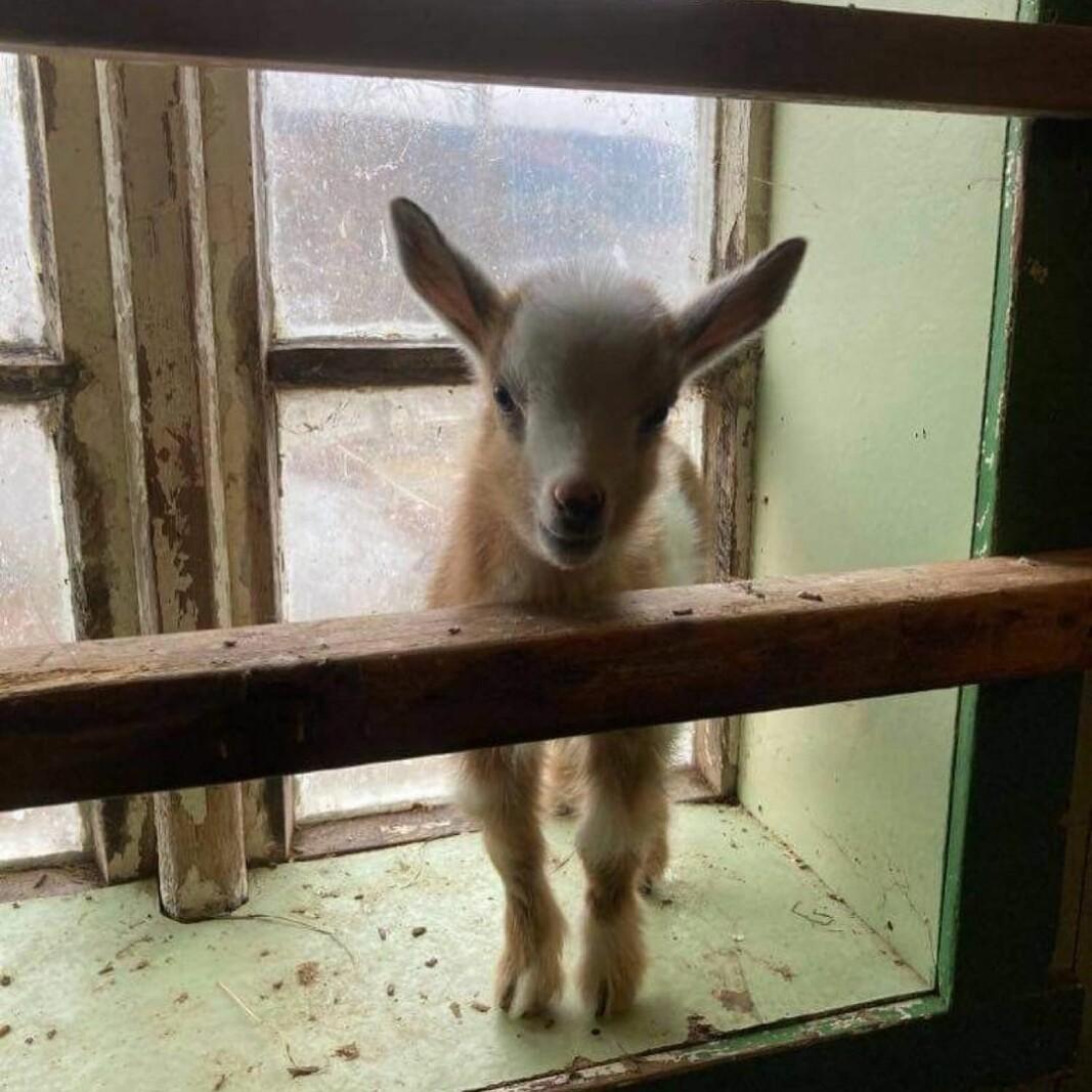 Bambi har visst flyttet inn i vinduskarmen😄
