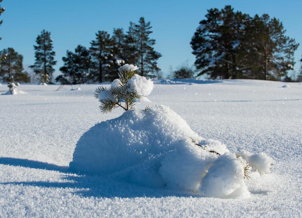 Vinterprakt
