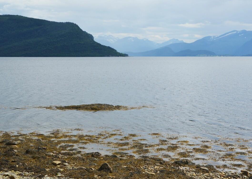 Denne «flesa» (flua) i sjøkanten har nok gjeve namn til plassen. I bakgrunnen Neslandet og Ålvundfjorden.