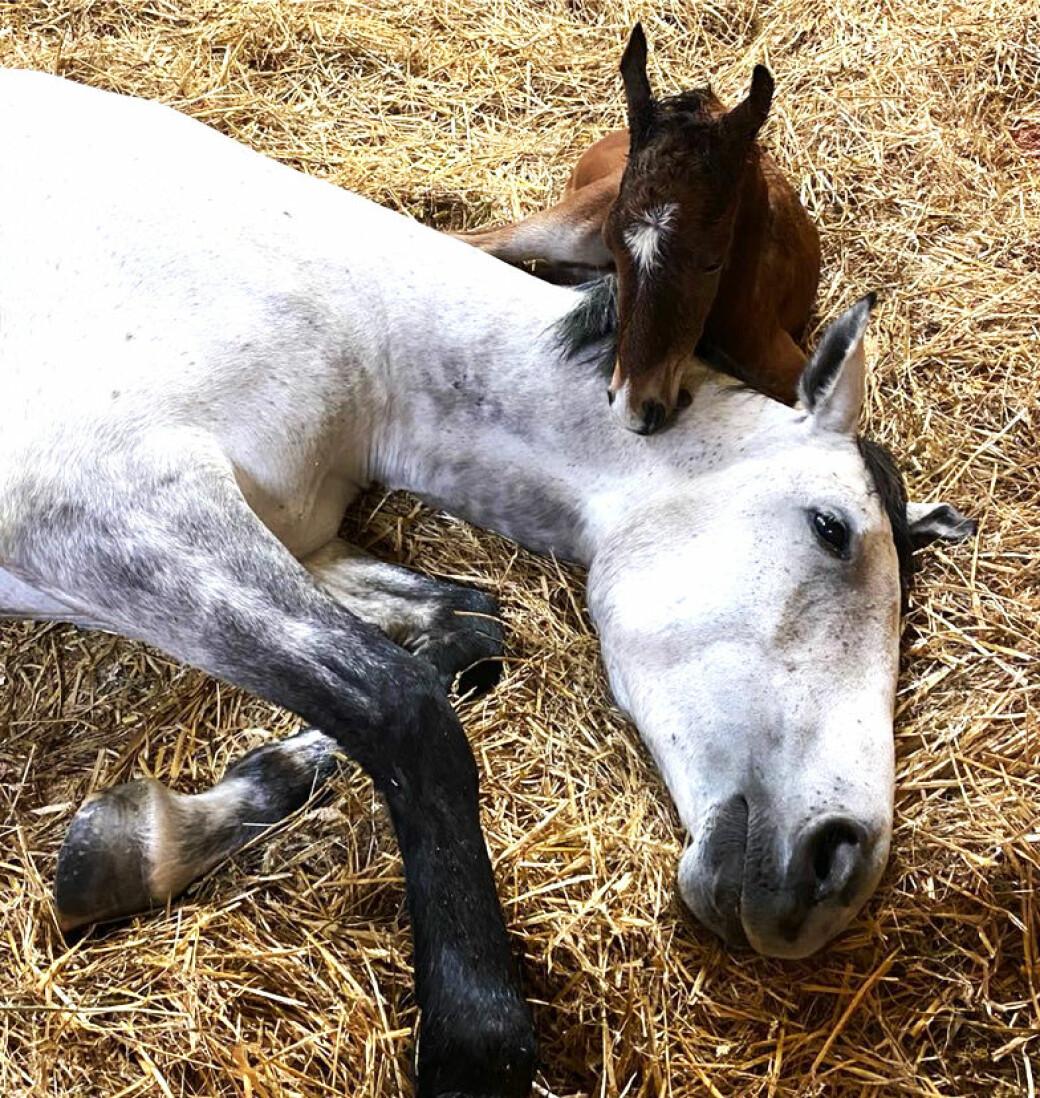 En sliten nybakt mor