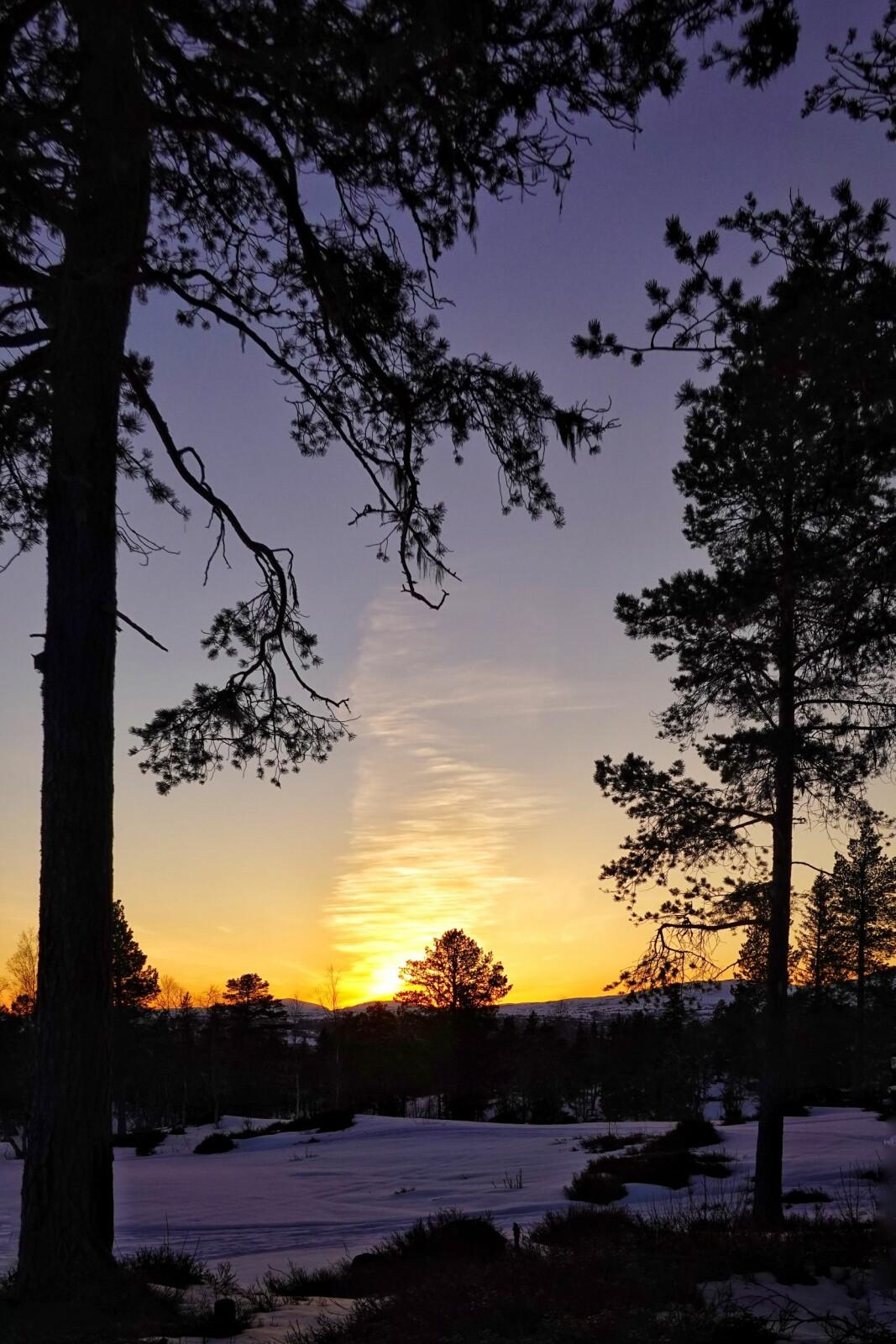 <p>Fargerik himmel over Tørsetmarka, etter at orrfuglene hadde avslutta festen og sola gått ned.</p><p><br></p>