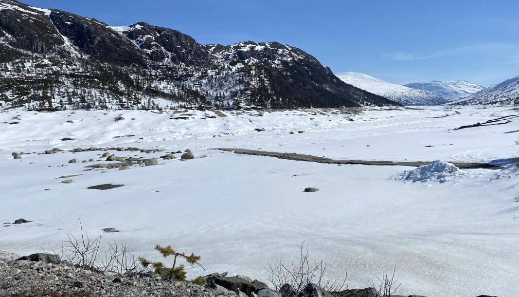 Det er visstnok lenge siden det har vært så lite vann i Gråsjøen som det er nå.