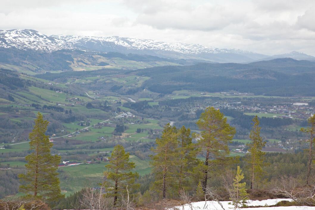 Fortsatte mot Duvåsen etter turstien. Ser ned i bygda med Rindal sentrum helt til høyre.