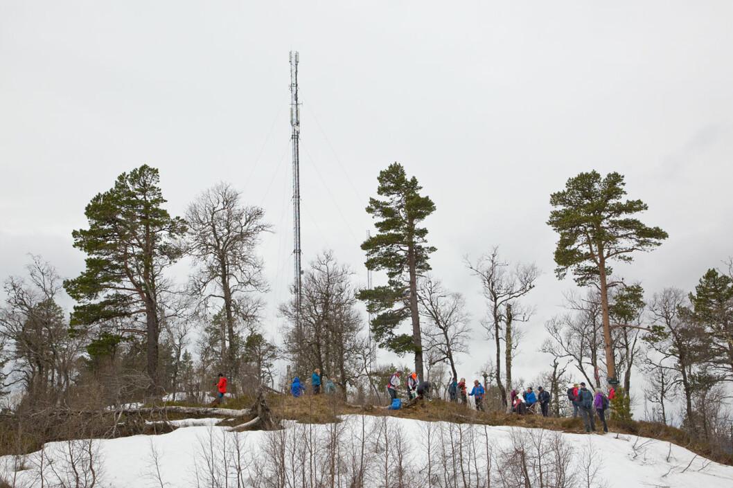 Framme ved trimposten på Duvåsen. Høyeste punkt på Duvåsen ligger 490 moh.