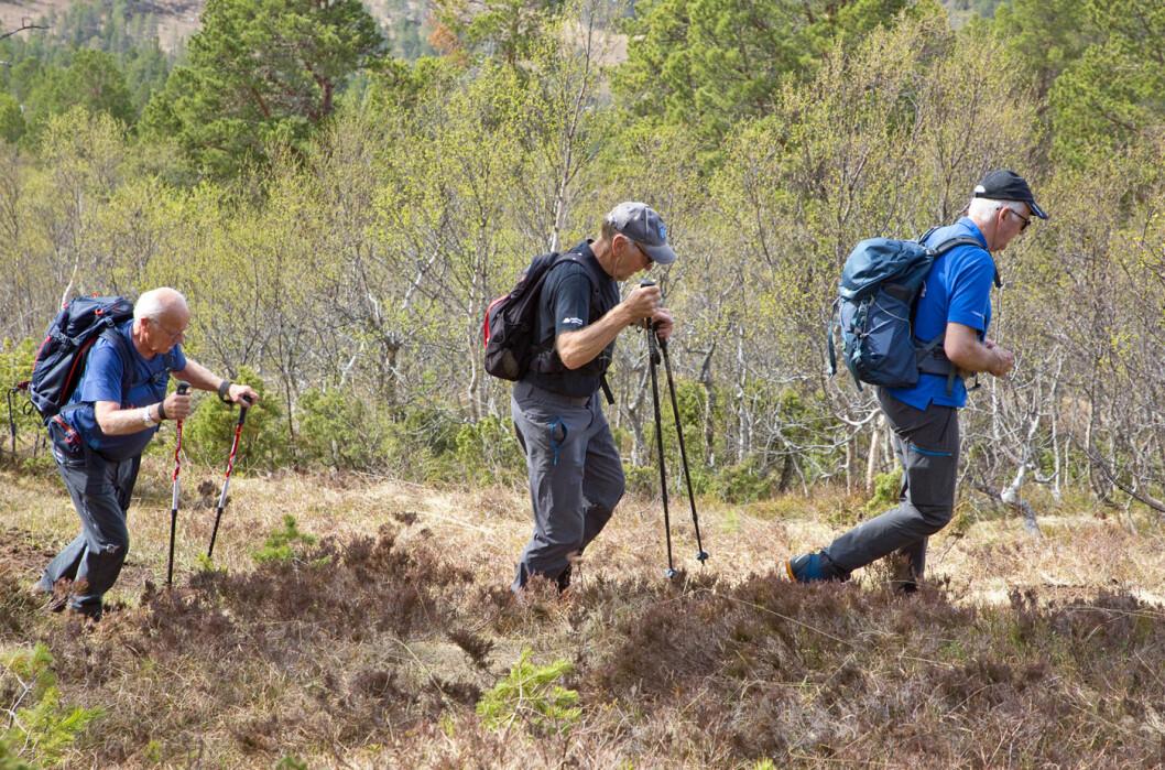Disse tre karene er veteraner når det gjelder Tirsdagstur´n. Vårgrønne bjørketrær er et betagende syn!