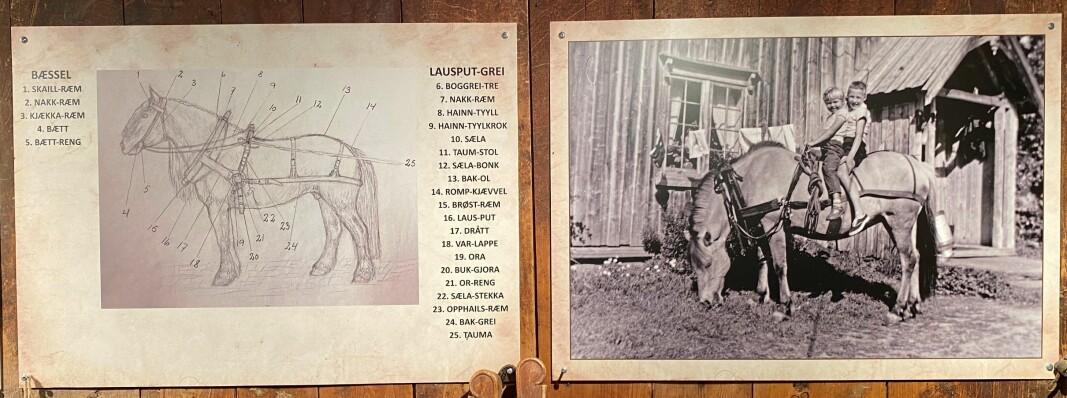 """Ola L. Løfaldli sin tegning med rindalsnavn på hver enkelt del av et """"hestgrei"""". Veggene i stallen er dekorert med gamle hestebilder. Etter hvert vil det komme navn på de som er på bildene også."""