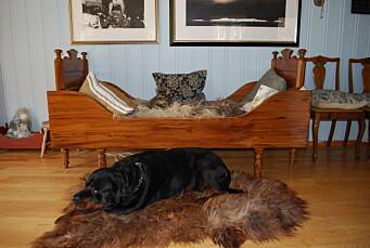 Katten Po og Laffen. - Skinnet Laffen ligg på er av Ola; den første bekren på Grytnes. Var som ein hund han, og spesielt glad i å leike med stor gummiball, fortel Nanna.