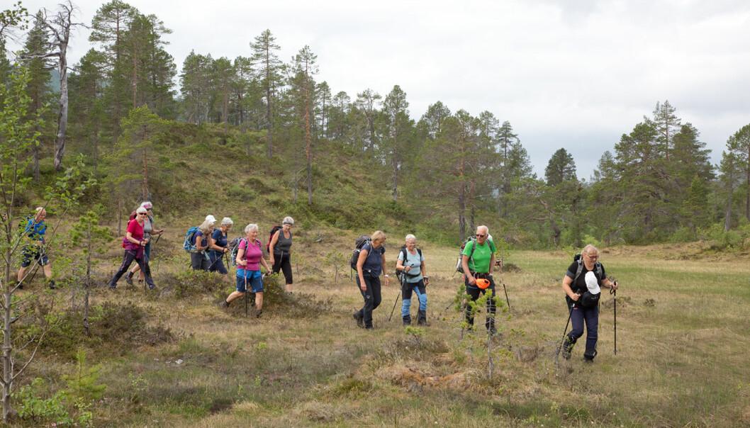 På vei fra Hallmyra til Vassdalen. 27 turgåere fikk en god og varm dag til fjells.