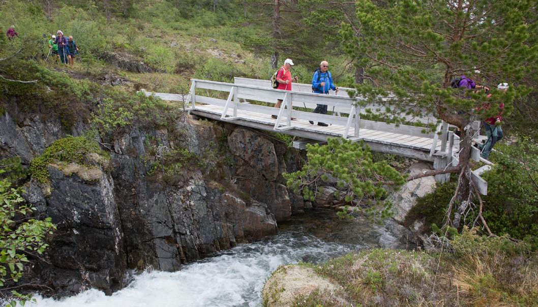 Lenger nede i lia gikk vi over Hardbakkelva. Mye å studere og snakke om på turen.
