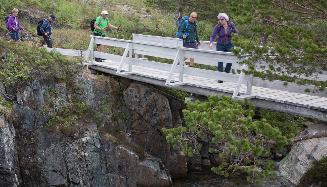 Fortsatte nedover på høyresida (vestsida) av Hardbakkelva. Å rusle av sted i «pratetempo» er vel litt av vitsen med fellesturer.