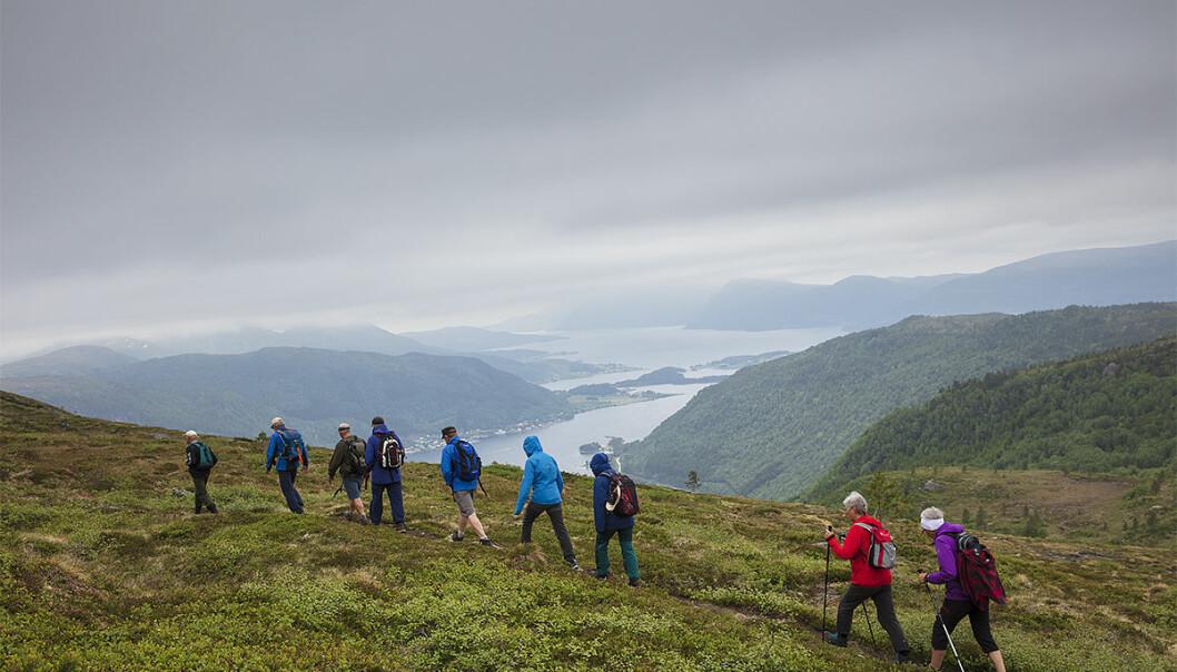 Mot toppen av Møkkelfjellet Fjellgruppa