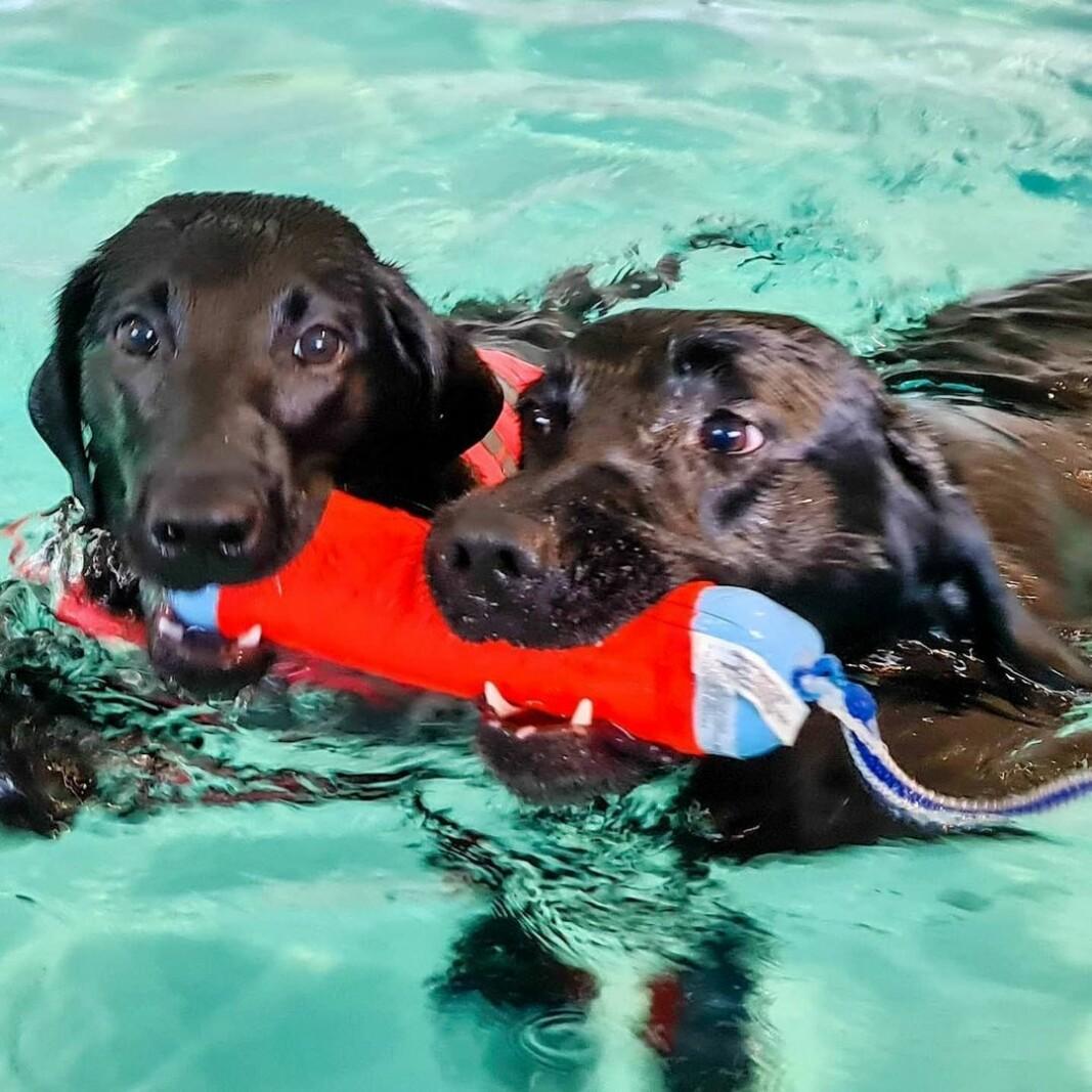 """Ayla på svømmetime for helsen skyld og Lycke (Fak's Lycke) som er 5,5 måneder er med for å kose seg i bassenget sammen med """"storesøster"""" 🥰"""