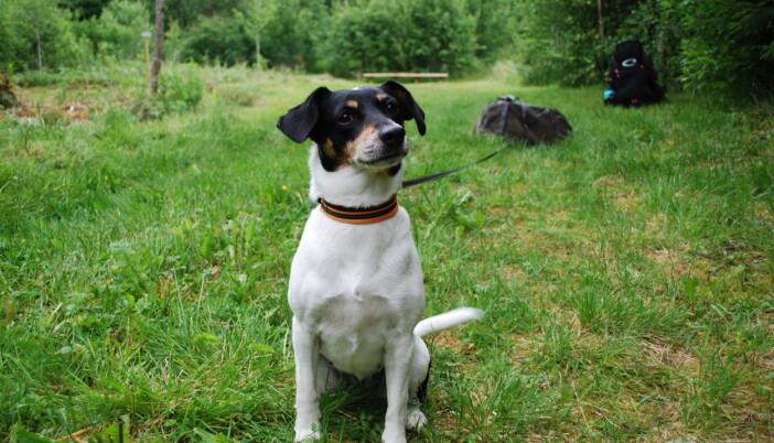 Ståles hund Nevin er oppattkalla etter ein kjent diskgolfpark i USA, og har vorte ein maskot i diskgolfmiljøet