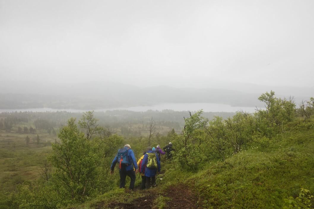 Utsikt mot Langvatnet