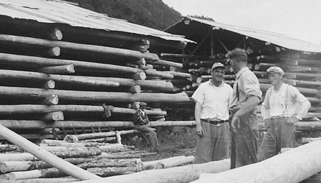 Blir tema: I garden Settem si 400 år lange sagbrukshistorie utgjorde Nordmøre Impregnering ein viktig periode. Foto frå 1950-åra.