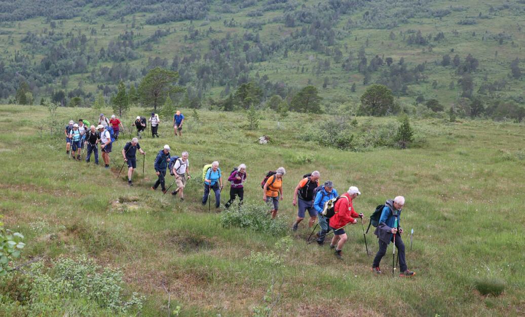 Parkerte øverst i Settemsdalen i Surnadal og gikk etter merkastien til Hjelmkona (Hjelmkånnå).