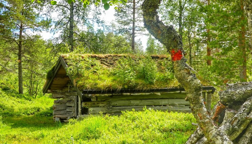 <p>Knapphaugløa er ett av de nye turmålene i Trimpoeng. Løa ligger i Langlimarka langs Trondhjems Turistforening sin eldste merka rute, som går fra Langlia/Seterlia til Trollheimshytta. Knapphaugløa ble restaurert av Turstigruppa i 2010.</p><p><br></p>