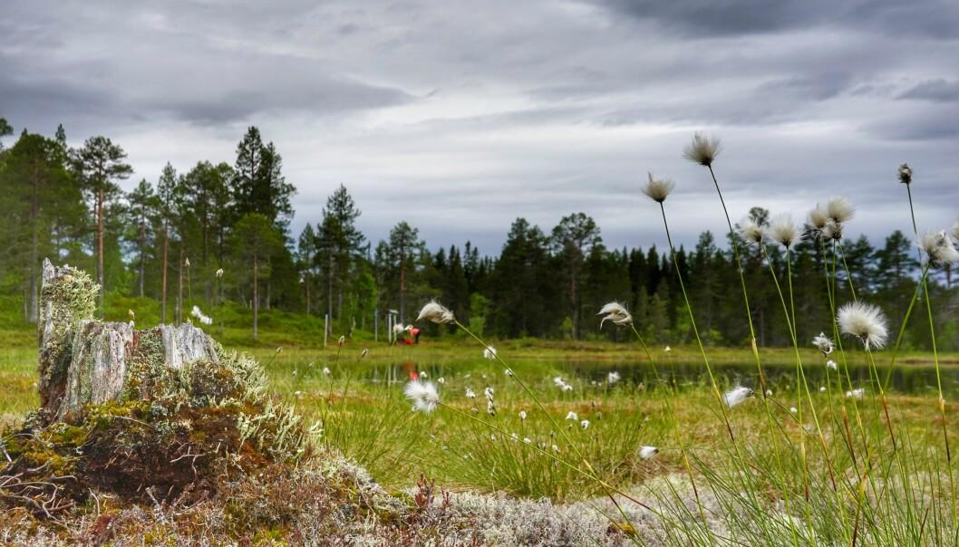 På Feiarskaret oppi Åsan, finner du en av de gamle trimboksene, som nå også er med i Trimpoeng.
