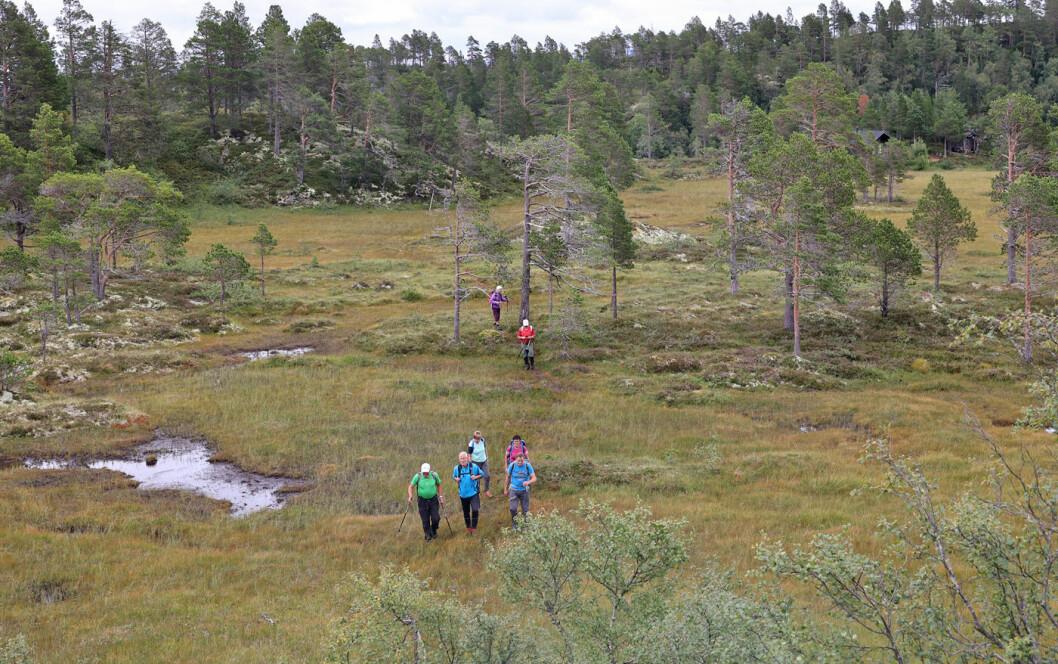 Fortsatte til Espåsfjellet gjennom et myr- og skogområde. Fulgte stier på praktisk talt hele turen.