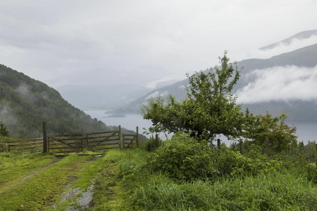 Utsikt til Todalen