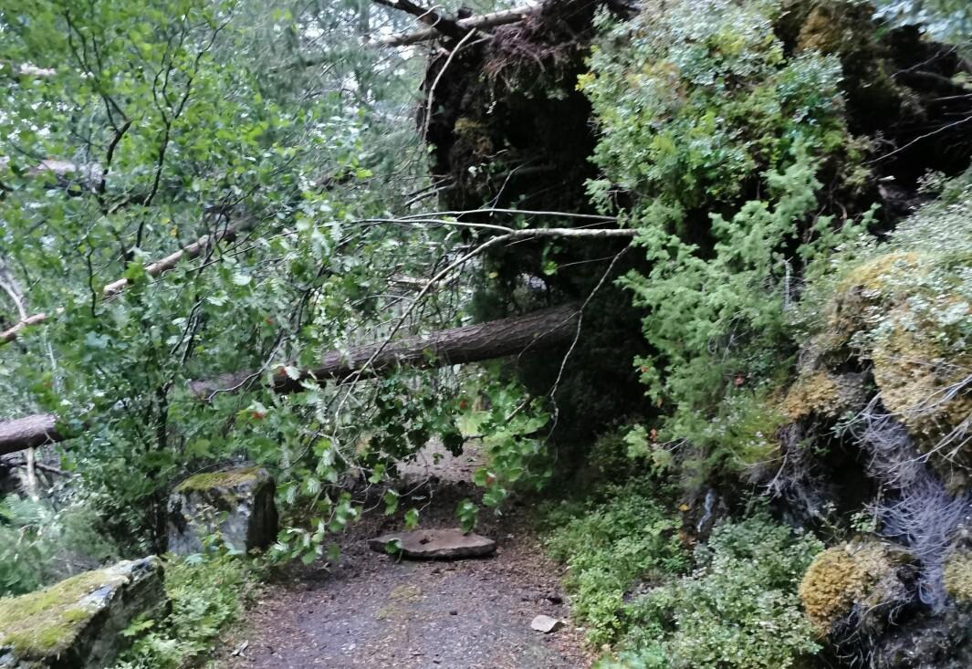 Dette bildet er tatt nær Svinvikrundens høyeste punkt tirsdag kveld.