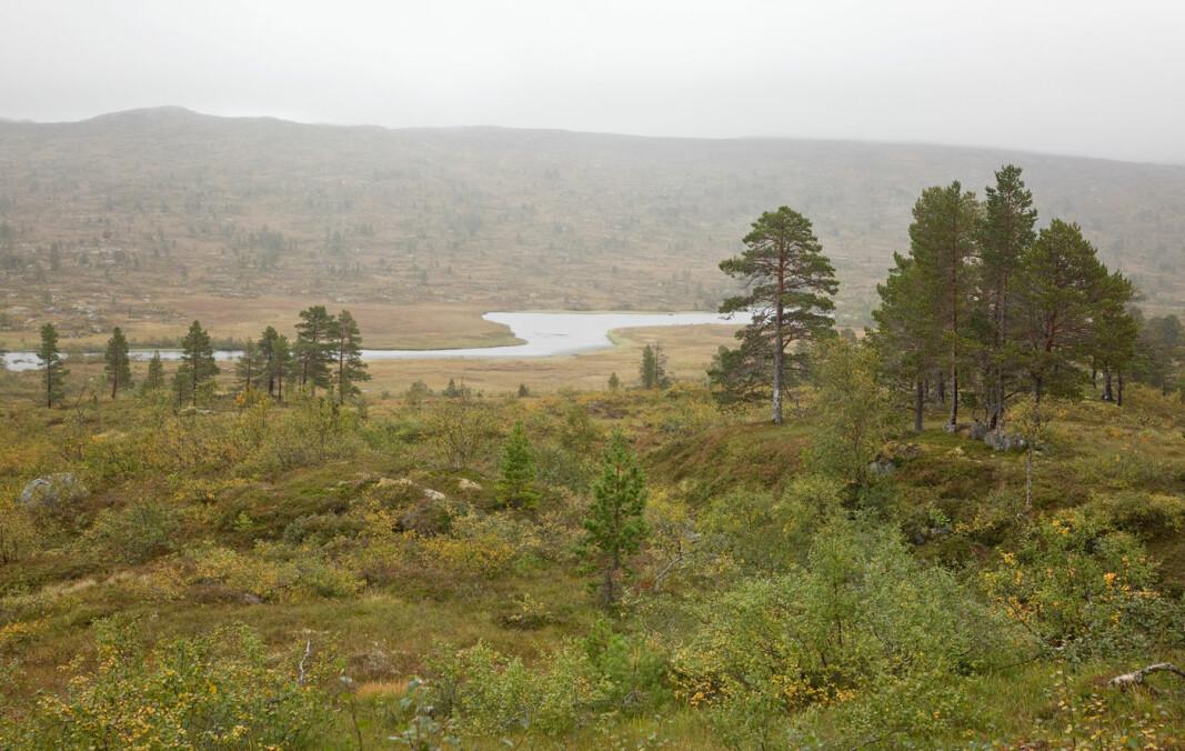 Bøllu flyter stille og rolig nedenfor Bolmsetrin, og kalles derfor Stillbøllu.