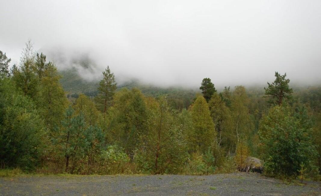 Storfjellet bak skodda