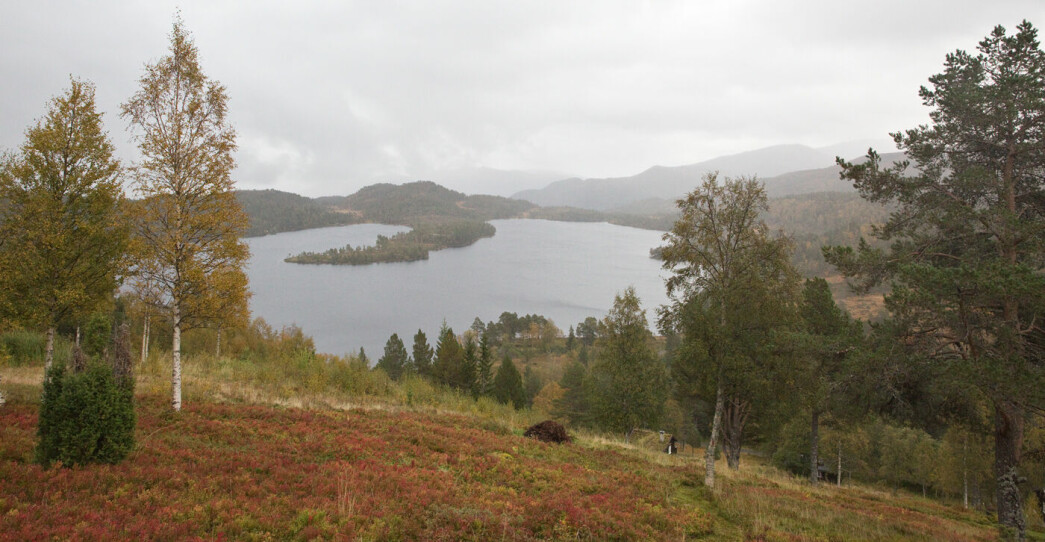 Vi kjørte til Oppsalvatnet og gikk først til Oppsalsetra. Bildet av Oppsalvatnet er tatt fra seterstølen til to Oppsal-garder som hadde seter her, Bortistuå og Utistuå.