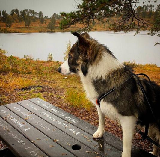 Ser inn mot helgen🐕🍁🍂 Eg veit meg ei bygd innmed Trollheimen blå med vangar så vide og glitrande å og fagraste fjorden i fanget. Tekst: Hans Hyldbakk