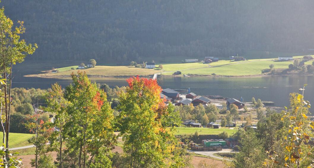 Snart slutt på turen vår. Ser mot Bøsundet. Veldig vakkert med høstfarger!