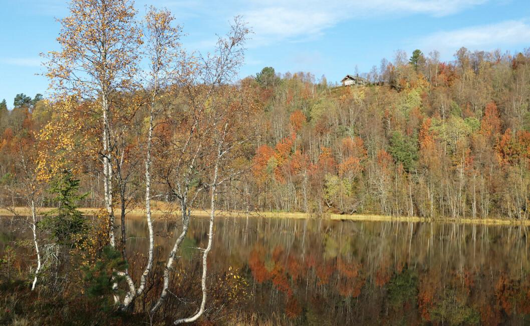 Gikk fra Oppigard til Kårvatnet. Et nydelig vær! Helt blikkstille på vatnet denne dagen.