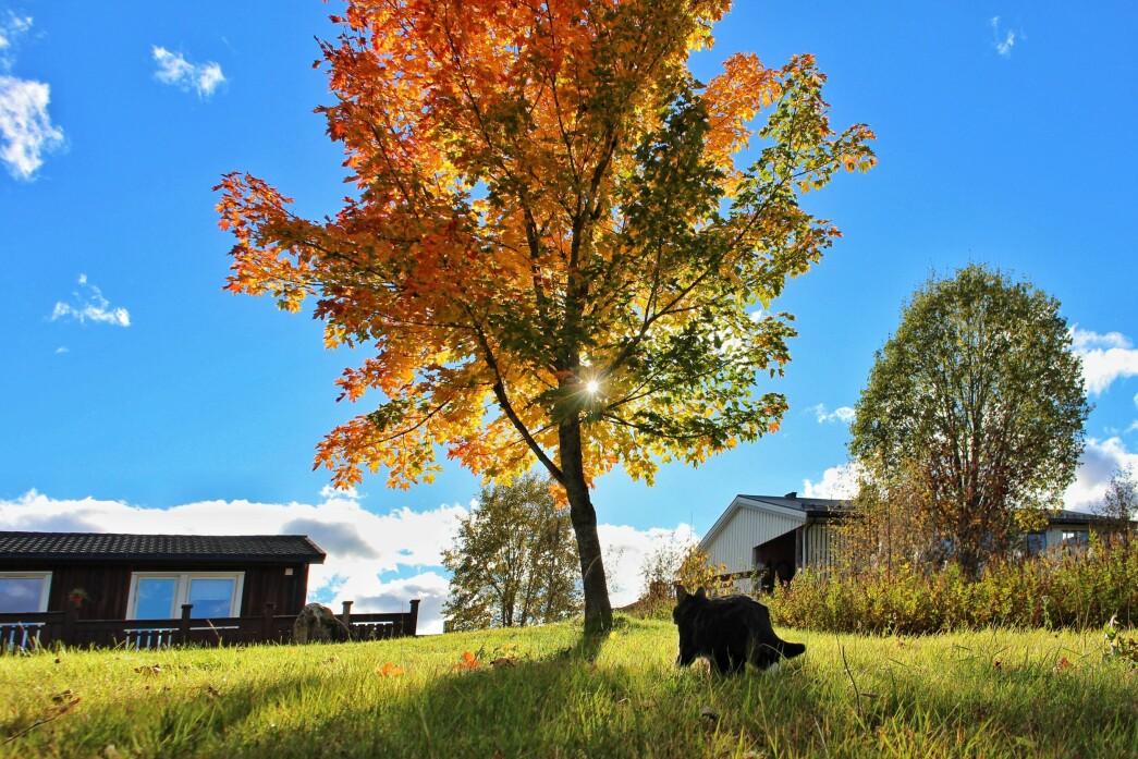 I Askildsåvegen nyter katten Luna høsten.