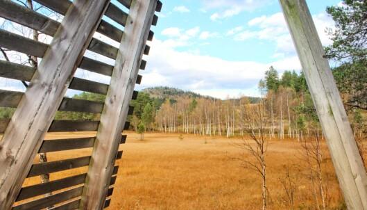 Bjørkeskogen fra Fugletittertårnet ved Igltjønna.