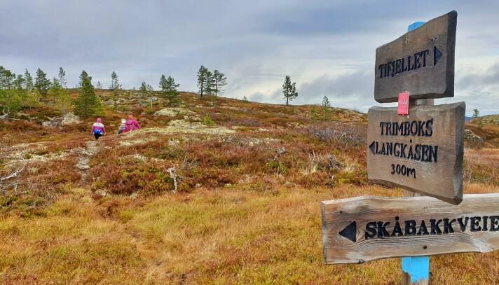 Stidele nummer 2, her tar du av fra Tifjell-stien og det er omtrent 300 meter til Langkåsen.